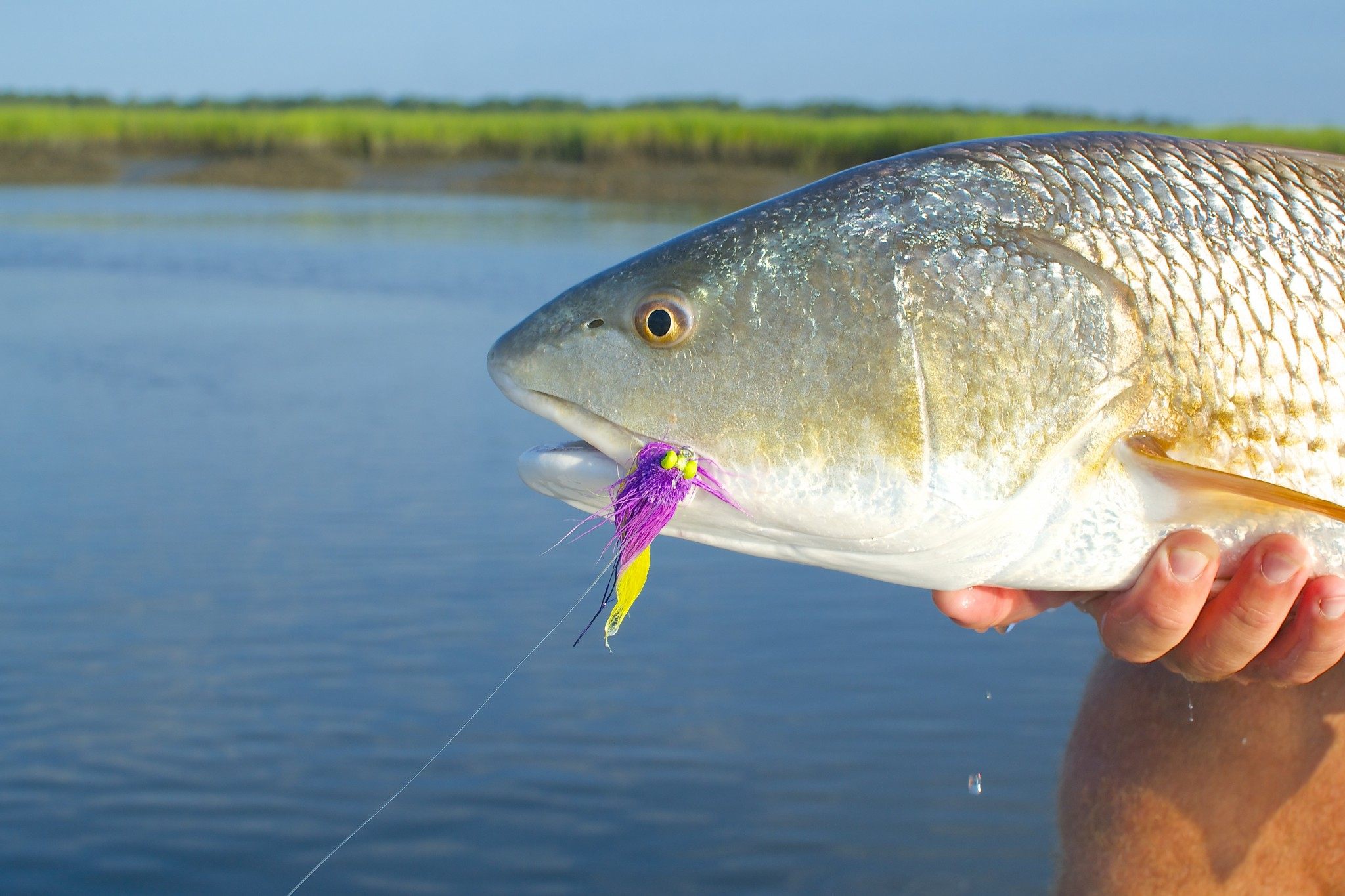 Living Water Guide Service- Fly fishing -redfish