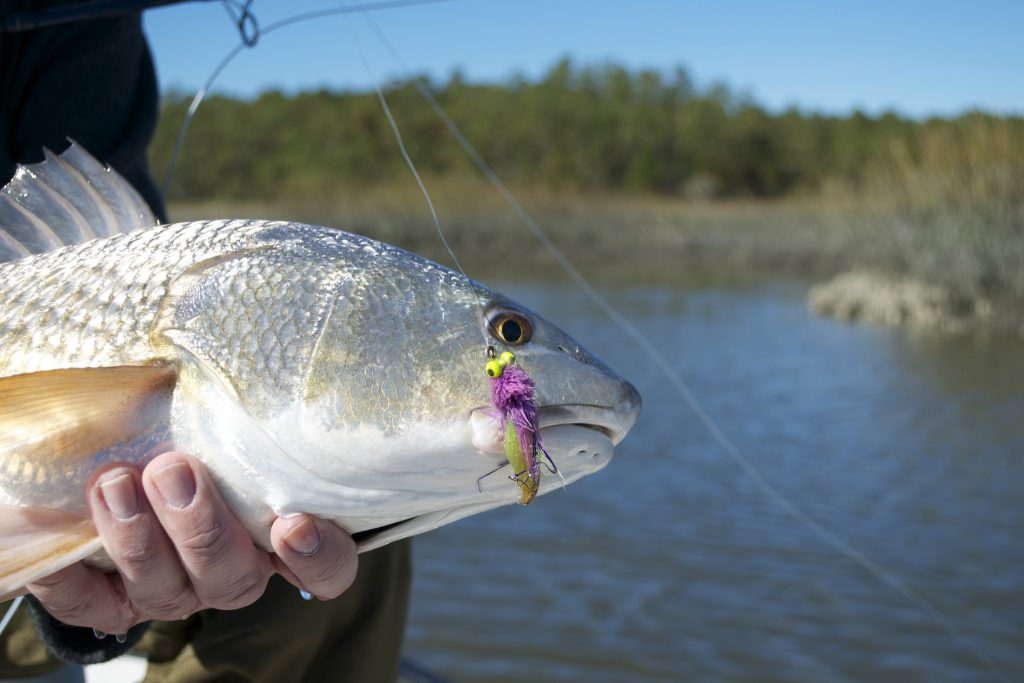report- fishing for redfish- living water guide
