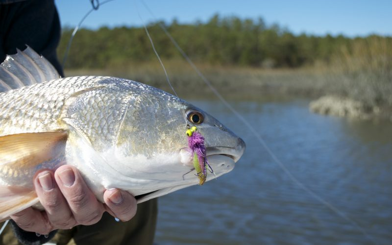Fly fishing for redfish- living water guide