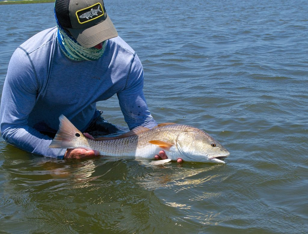 pawleys island redfish