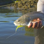 Redfish Charters in Georgetown
