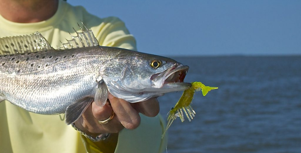 speckled sea trout - fishing charters