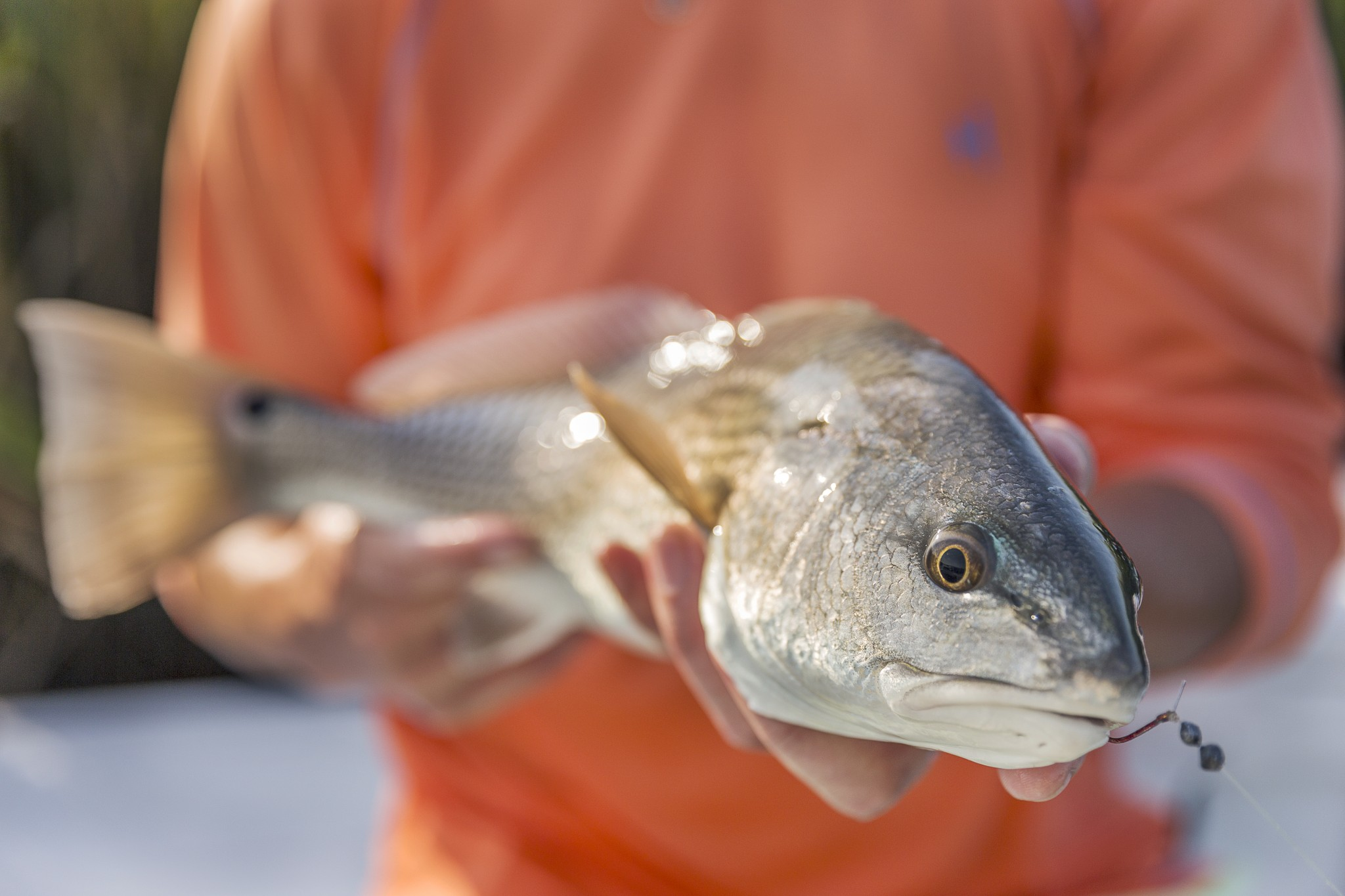 Myrtle beach fishing charters video for South carolina saltwater fish species
