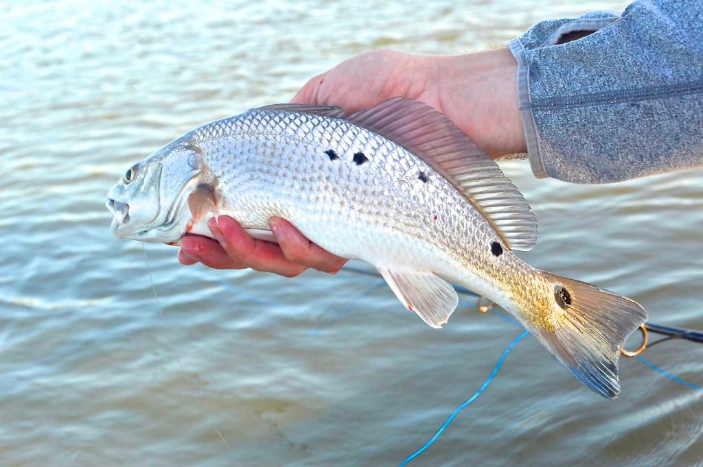 redfish-fall fishing