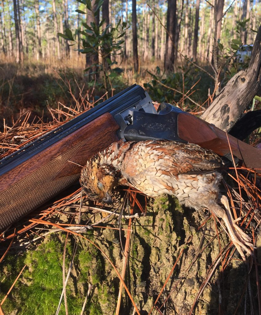 quail hunting South Carolina