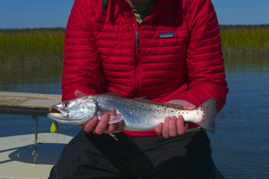 speckled Sea trout- fishing