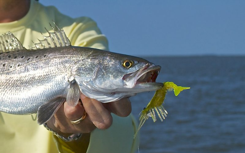 Fishing for Speckled Sea Trout