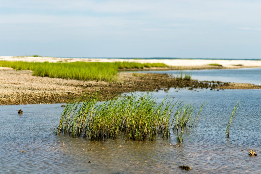 Inshore fishing locations - Murrells Inlet