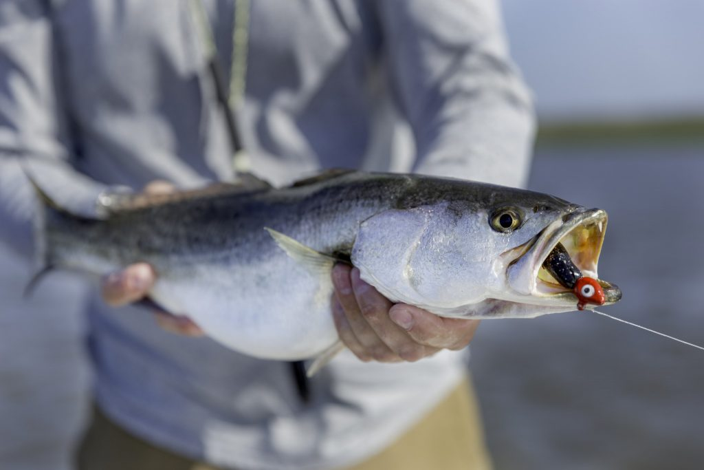 Speckled Sea Trout - Pawleys Island fishing charters
