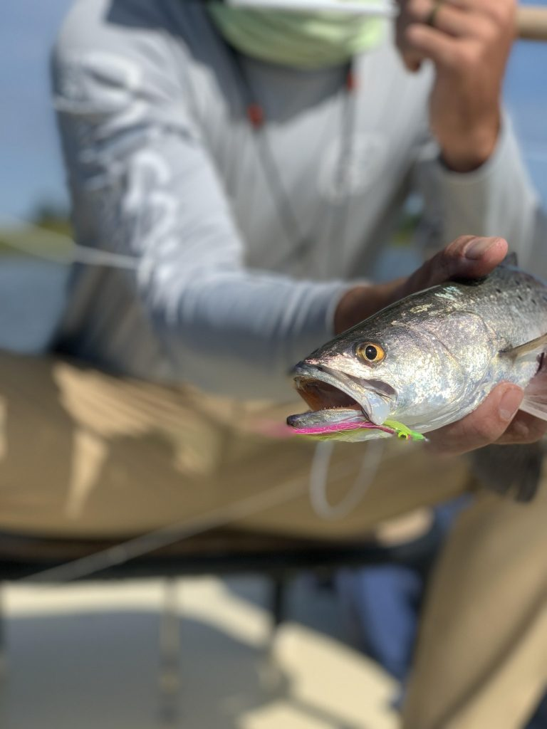 Fall Fishing Charters - sea trout